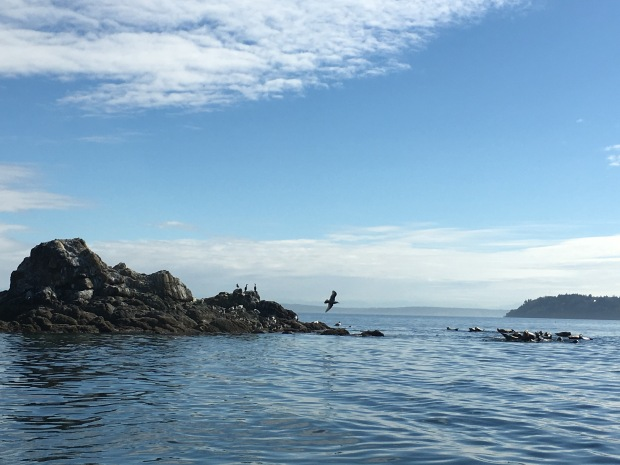 Vacation Diary Seattle Port Ludlow Olympic With A Long E